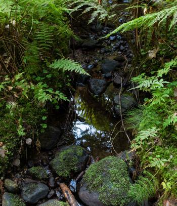 Stream in Gullmarsskogen ravine