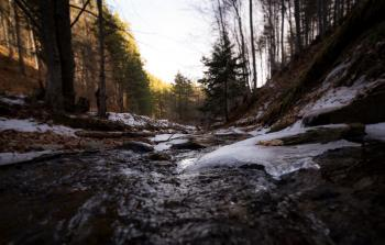 Streams in Between Forest Trees