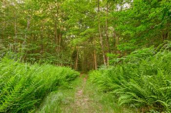 Summer Fern Trail - HDR