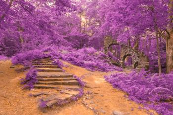 Sun Kissed Forest Castle Ruins - Purple Fantasy HDR