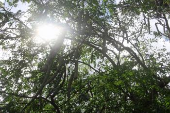Sun light comping through the trees