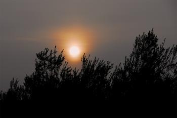 Sun Peering Through the Fog