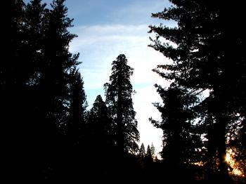 Sundown Forest