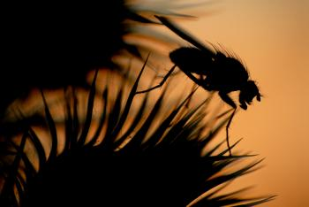 Sunset fly