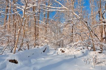 Susquehanna Winter Forest - HDR