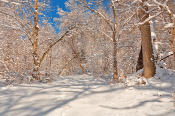 Susquehanna Winter Forest Trail - HDR