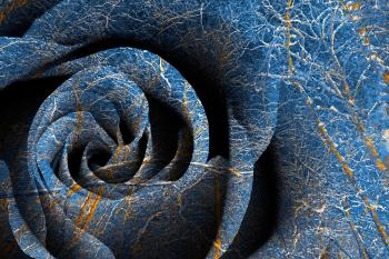 Susquehanna Winter Rose