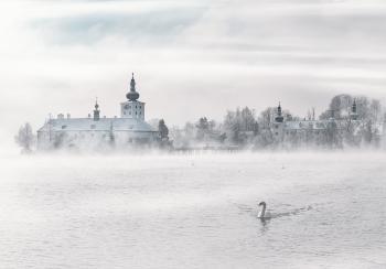Swan on Body of Water Near Building