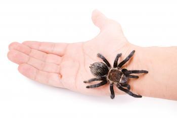 Tarantula on the Hand