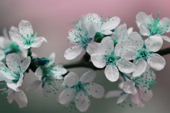 Teal Blossom Flowers