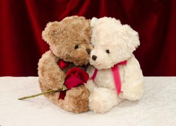 Teddy bear gives a red rose to a special one
