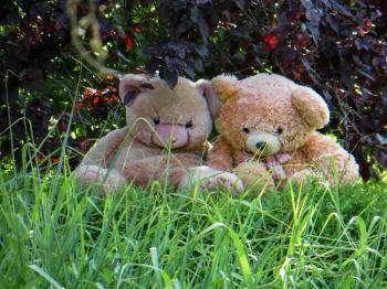 Teddy Couple