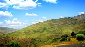 Terraced Vineyards - Walled Terraces - Douro Valley