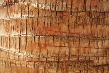 bark of palm tree