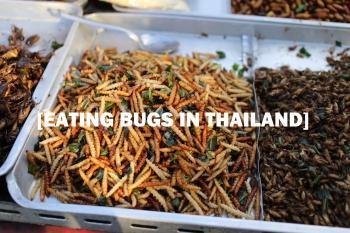 Thai cockroach