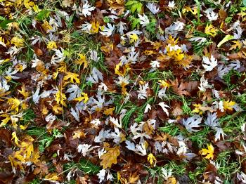 The beautiful natural autumn carpet