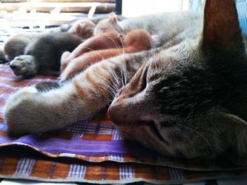 The Cat Family 2