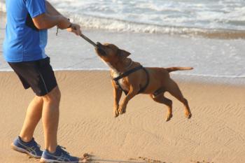 The dog plays on the beach