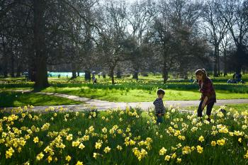 The Green Park, London in the early Spring