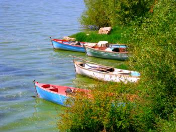 Three Boats in Reeds