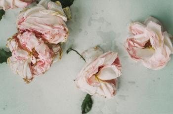 Three Pink Roses on White Table