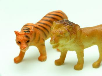 Tiger and lion