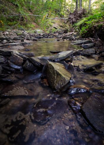 Time Lapse Photo of Stream on Green Forest