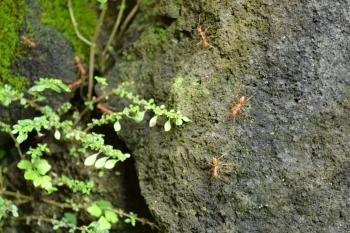 Tiny ants walking on a rock