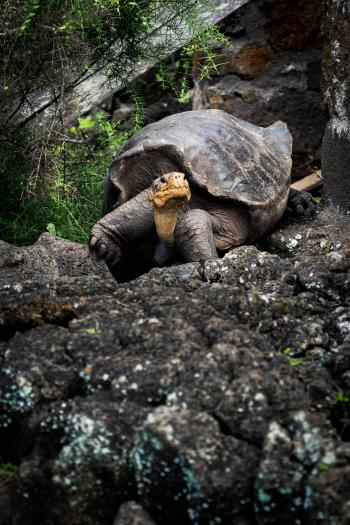 Tortoise on Rock