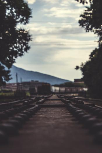 Train Railways Beside Large Trees