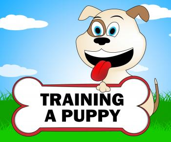 Training A Puppy Represents Trainer Instruction And Coach