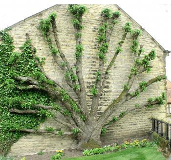 Tree agains a wall
