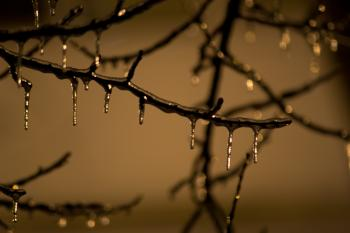 Tree branch frozen on winter night