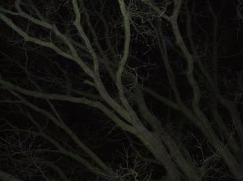 tree branches at night