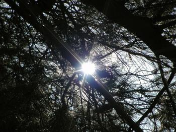 Tree branches in the sun