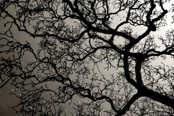 Tree branches with backlight