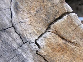Tree cut texture