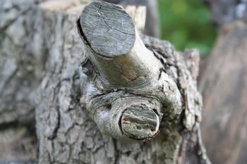 Tree lump