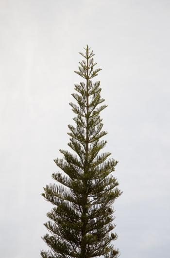 Tree piercing the sky