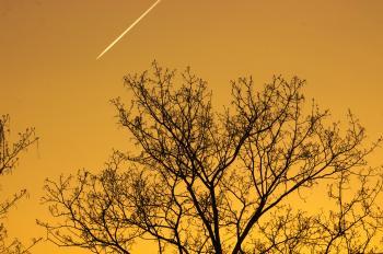Trees against Sunset Sky, Emser Strasse, Wilmersdorf