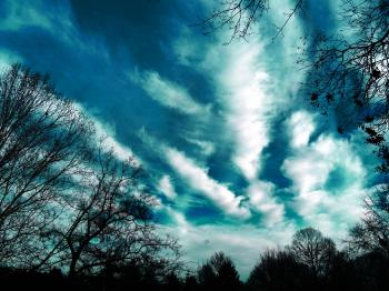 Trees and Clouds Photography