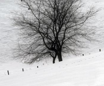 Trees covered in snow