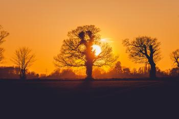 Trees during Sunset