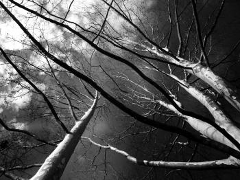 Trees Grayscale Low Angle Photography