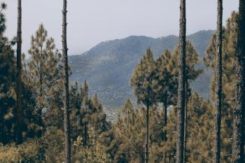Trees On Mountain