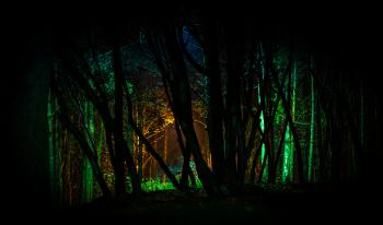 Trees With Green Light in Nighttime Photo