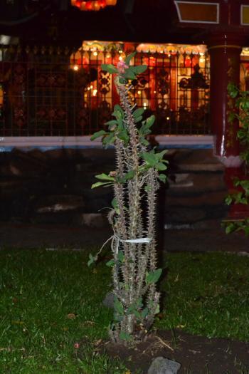 Tropical Cactus Tree