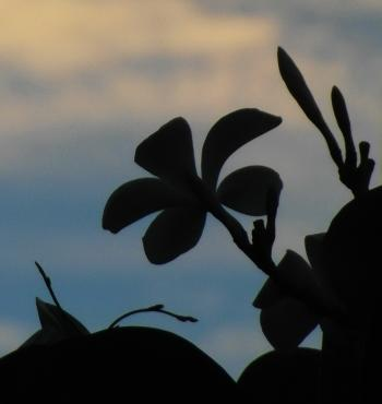 Tropical Flower Silhouette