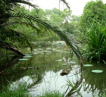 Tropical Lilly Pond