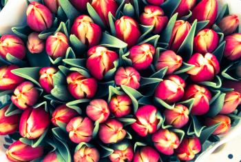 Tulips bouquets